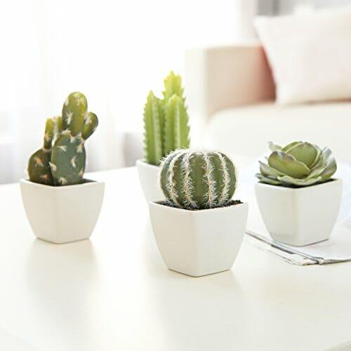 small cacti