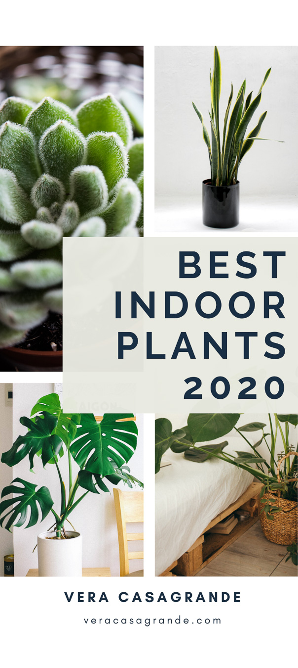 Best Indoor Plants for Apartments