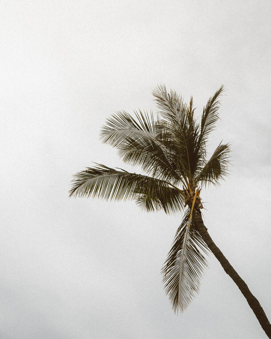 resting and relaxing under a palm tree