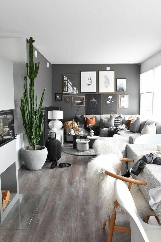 cactus living room indoor plants