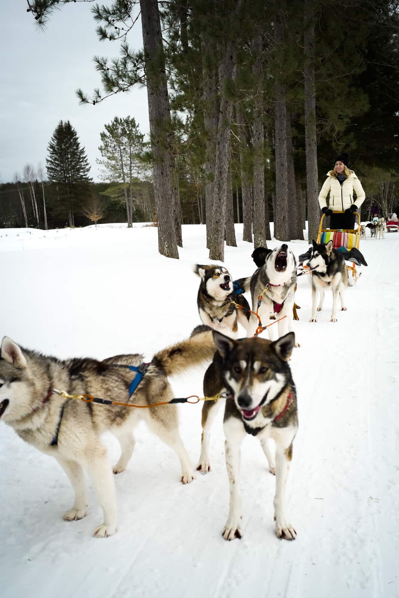 Winter activities such as dog sledding are great for all ages.