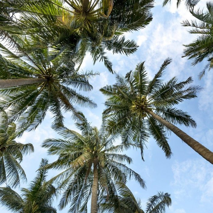 palm trees, sky, palms